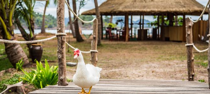 Golden Buddha Beach Resort Outside