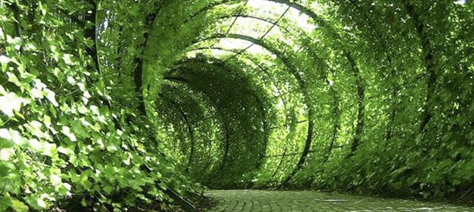 Down the Rabbit Hole Summer Garden Ideas